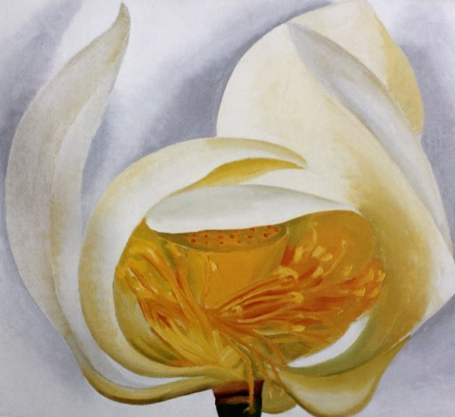 "GEORGIA O'KEEFFE, ""White Lotus,"" 1939, oil on canvas, 20 x 22 in, Muscatine Art Centre, Iowa"
