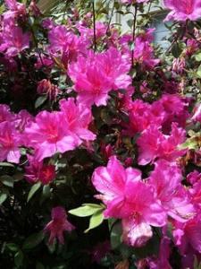 Spring Garden Festival at Kanapaha Botanical Gardens