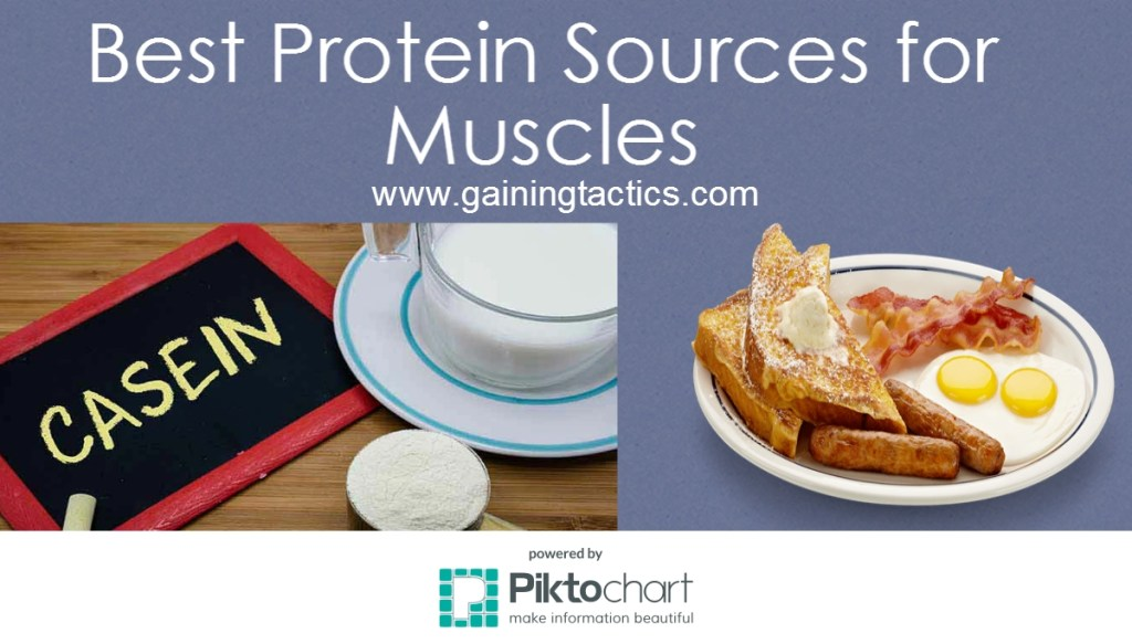 Best Protein Sources For Your Muscles