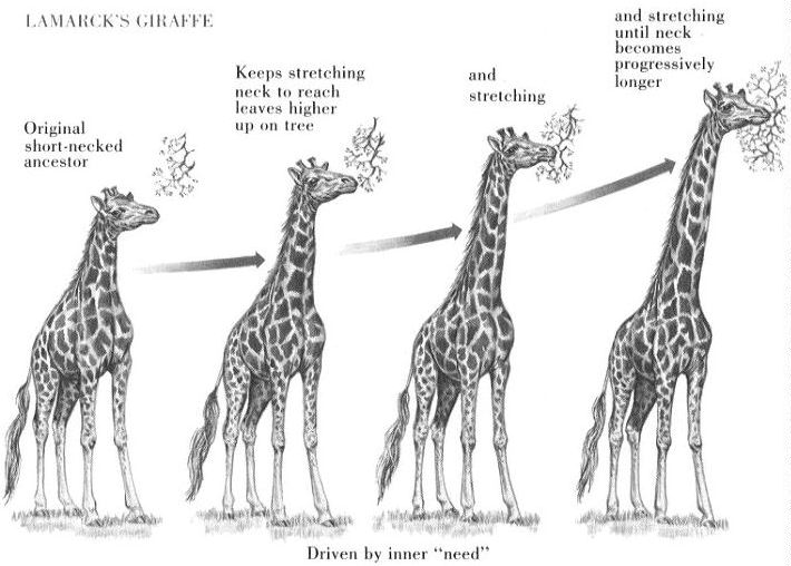 giraffe_lamark