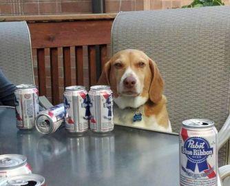Beer is More Effective Than Tylenol Says Best Doctors Ever.