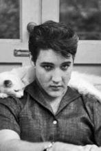 Elvis Foto: catnipdaily.com