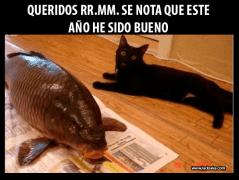 meme-gato-reyes-magos