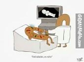 radiografia-a-una-rosca-de-relles