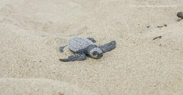 Ayotlcalli: Santuario de las Tortugas; el mini documental de David Muñiz