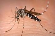 Caz de infecție cu virusul West Nile la Galati
