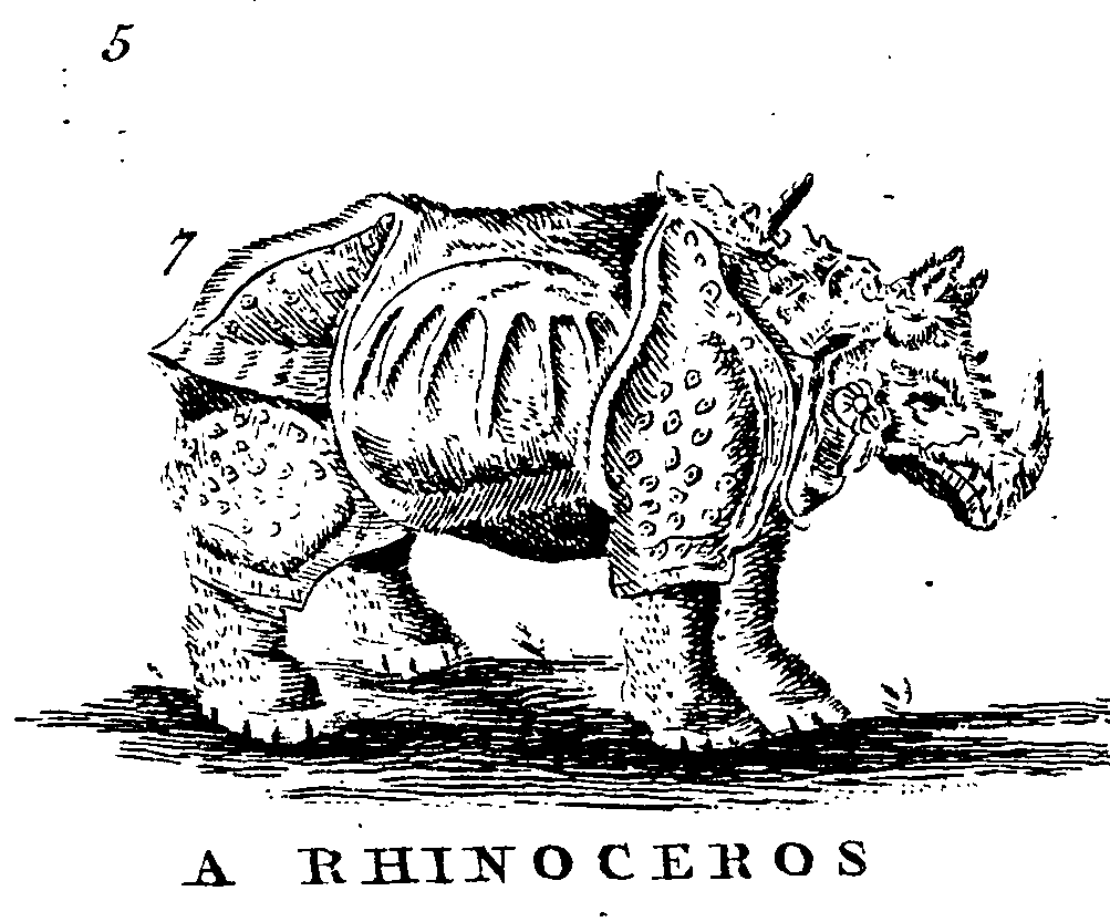 The Myth of the Rhinoceros