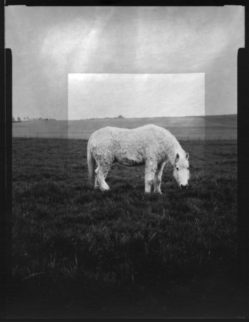 Le cheval, 2014.