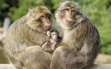 Foret des singes, Rocamadour.