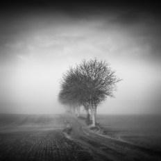 Etude Brume et arbres