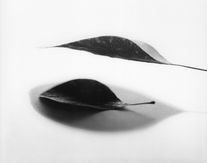 2016, argentique sur papier baryté. 70 x 90 cm