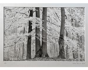 Arbres Etude, 2013. Technique mixte sur papier préparé, 50 cm x 70 cm.