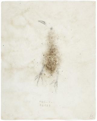 Les oiseaux de Barchat, 2019