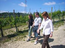 Дегустация итальянских вин Флоренция