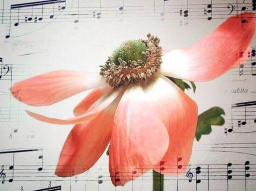 Basta pesticidi, alle piante piace Mozart - Galileo