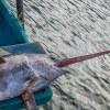 Pesca illegale: Oceana punta il dito contro l'Italia