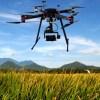 Xylella e punteruolo rosso: arrivano i droni