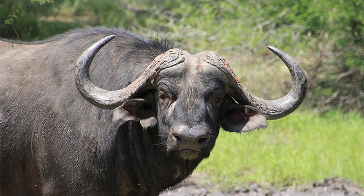 Risultati immagini per bufale