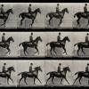 L'uomo che fotografava i cavalli