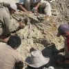 In Perù il più antico antenato delle balene