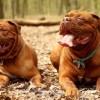 Quei geni che rendono i cani così socievoli