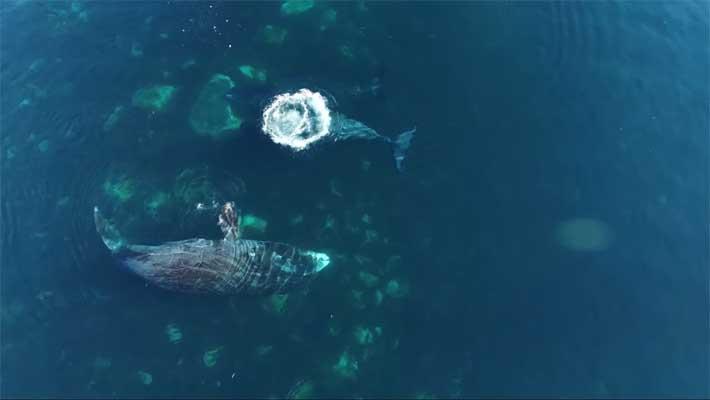 La Spa delle balene artiche