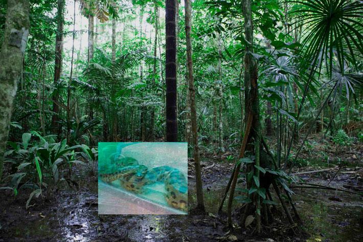 Teoskuva: Kati Roover, Anaconda (videostill teoksesta Coexistence, kuvaaja: Kati Roover)