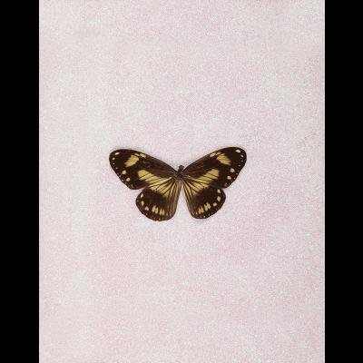 miranda pissarides butterfly xv