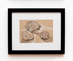 She Sells Seashells by the Seashore Graphite $95.00