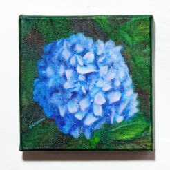 Blue Hydrangea Acrylic on canvas $125.00