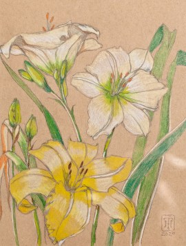 Church Lily Wareham Prismacolor Matted & framed $145.00