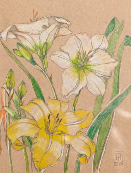Church Lily Wareham Prismacolor Matted & framed $145.00