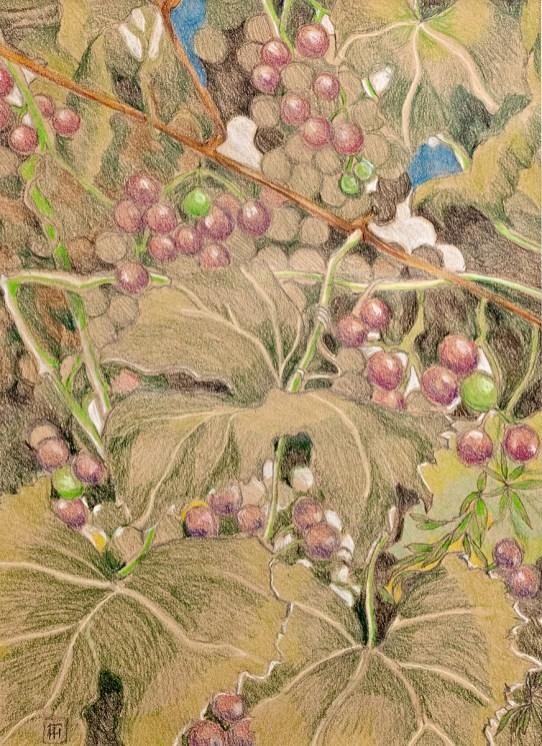 David's Vineyard Prismacolor Matted & framed $145.00