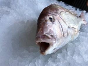 pescaderia online