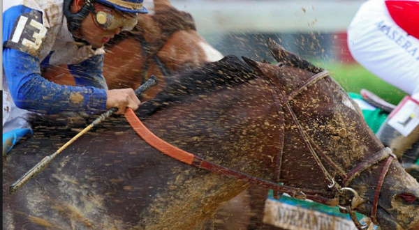 2016 Belmont Stakes Mudders Horses That Can Run In The Mud