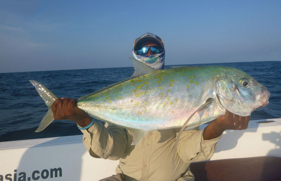 No10_gold-spot-trevally_fishing_jigging_andaman_Shimano-Saragosa_gamefishingasia_boat_big-fish_gtpopping_boat-charter_angler_Suri