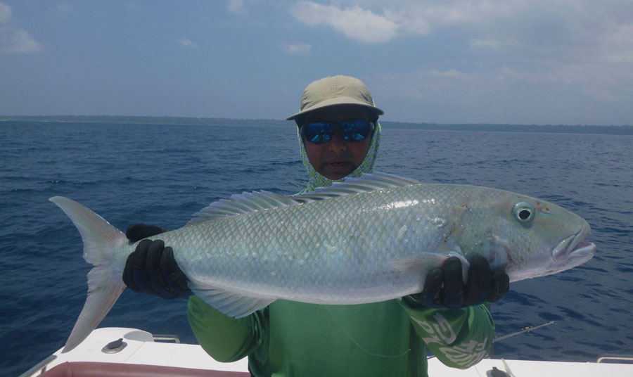 No13_Green-jobfish_fishing_jigging_andaman_Shimano-Stella_gamefishingasia_boat_big-fish_gtpopping_boat-charter_angler_Sahadev-Shetty