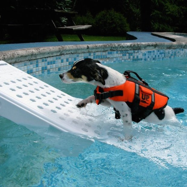 Skamper-Pet-Pool-Escape-Ramp