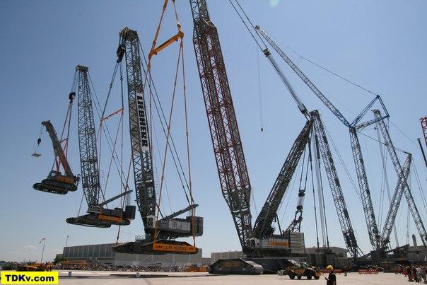 Crane Holding A Crane Holding A Crane Holding A Crane Holding A Model Crane