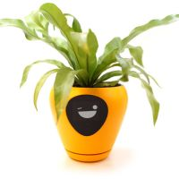This Pot Will Turn Your Plants Into Similar To Tamagotchi Pets