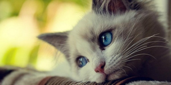 First world_cat problems
