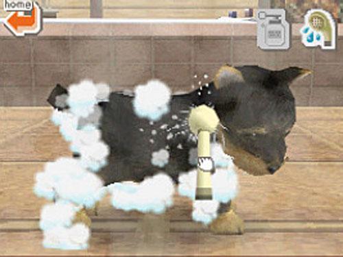 Nintendogs: Chihuahua & Freunde