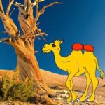 G2R-Help The Thirsty Camel HTML5