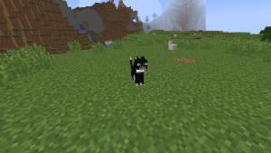 Tame-a-Cat-in-Minecraft