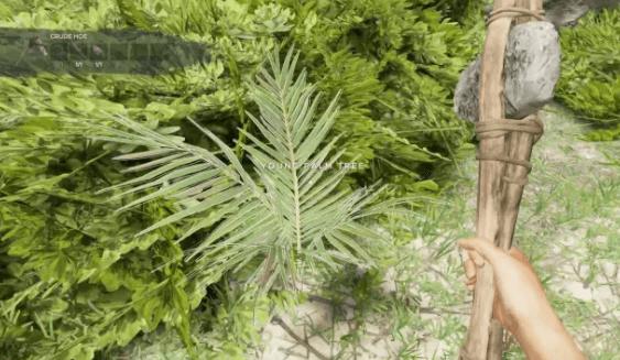 Le Yucca repousse