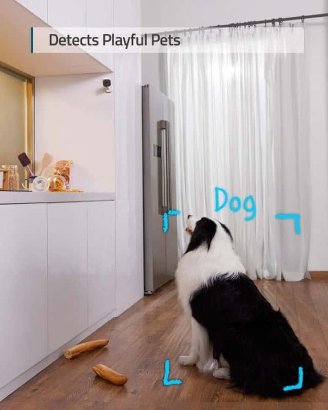 Eufy 2k Dog