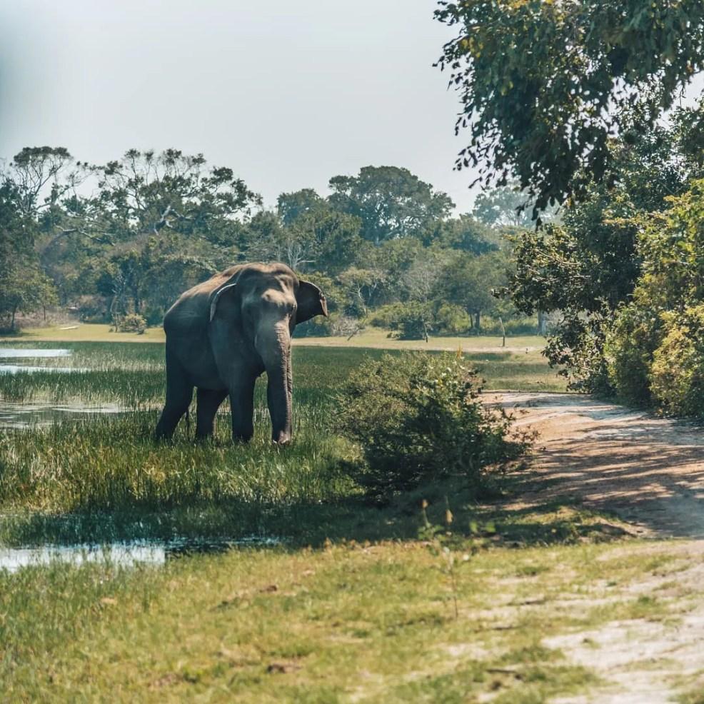 Nature Park in Sri Lanka, things to do in Sri Lanka, Sri Lanka travel guide