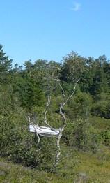 Lerret på treet