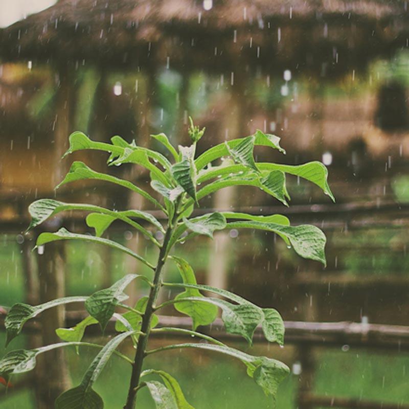 Lluvia que cae sobre una pequeña planta.