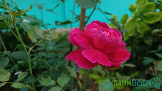 Moto-G-3rd-gen-2015-Camera-Quality-test-Sample-Shots